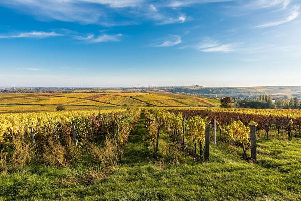 Herbstliche Weinberge der Südpfalz