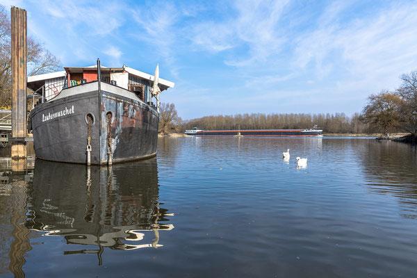 Restaurant Lautermuschel und Schifffahrtsmuseum bei Neuburg