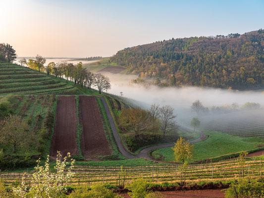 Dichter Morgennebel bei Birkweiler