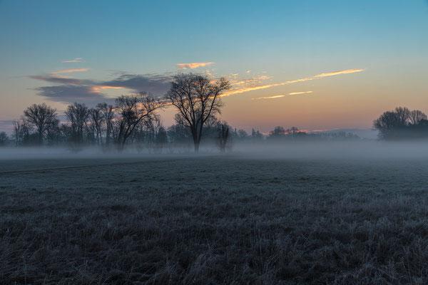 Früh morgens in den Geinsheimer Wiesen
