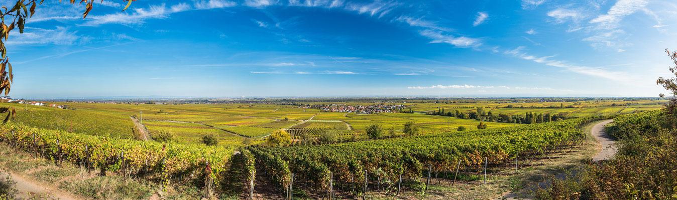 Panoramablick auf das Rebenmeer südlich von Weyher