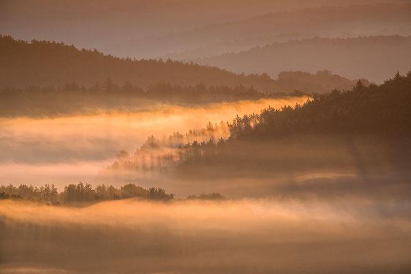 Lichtspiele im Nebelwald