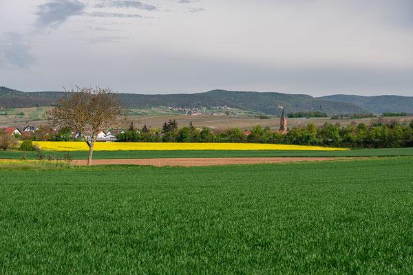 Rapsblüte bei Kapellen-Drusweiler