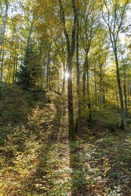 Herbstwald bei Eppenbrunn