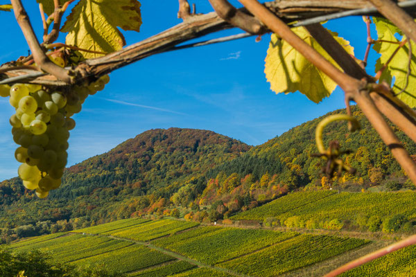 Birkweilerer Impressionen zur Weinlese