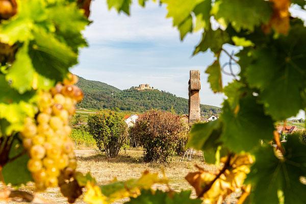 Blick durch die Weinreben zum Hambacher Schloss