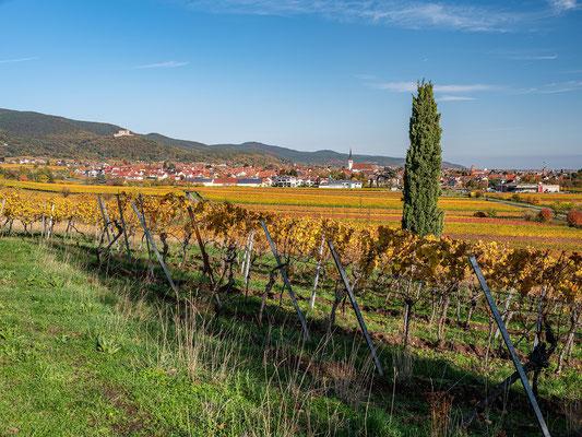 Blick auf Maikammer und Hambacher Schloss