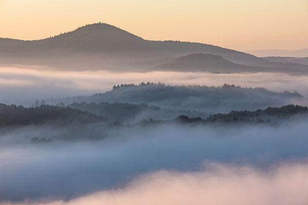 Morgennebel im Pfälzerwald