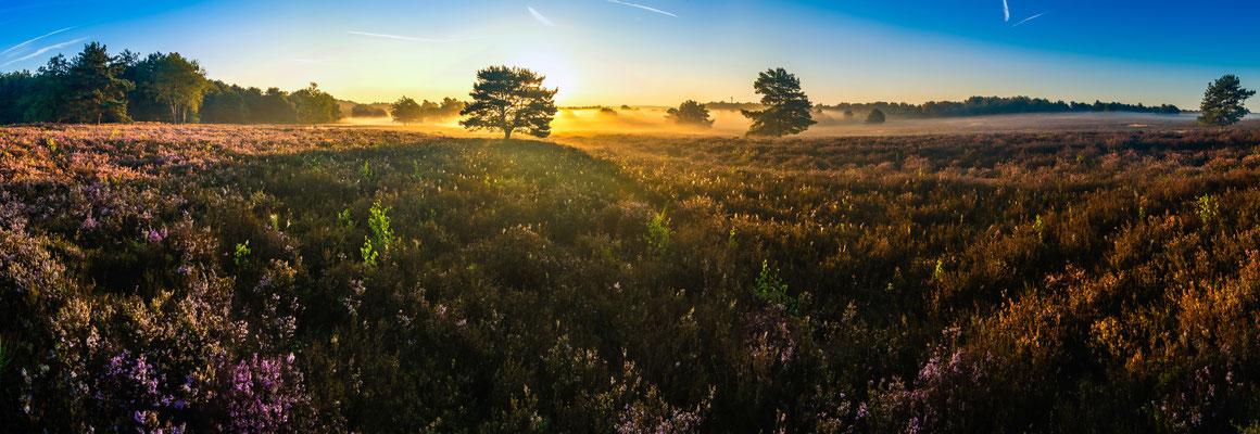Sonnenaufgang über der Mehlinger Heide, Panoramaaufnahme, 20 x 58 cm, Aluminiumrahmung, Kodak Pro Endura Fotopapier, 49 €