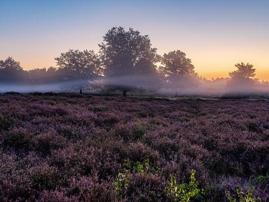 Morgennebel über der Mehlinger Heide