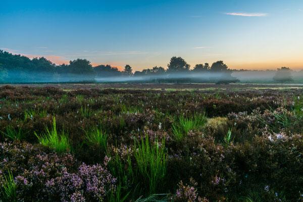 Nebel über der Mehlinger Heide