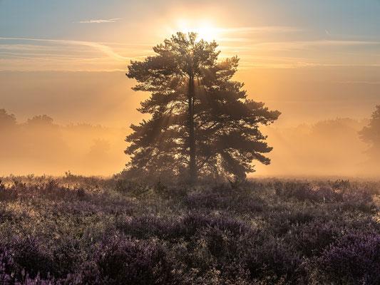 Nebelmorgen in der Mehlinger Heide