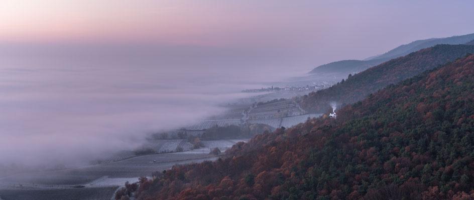Nebelmorgen am Hambacher Schloss