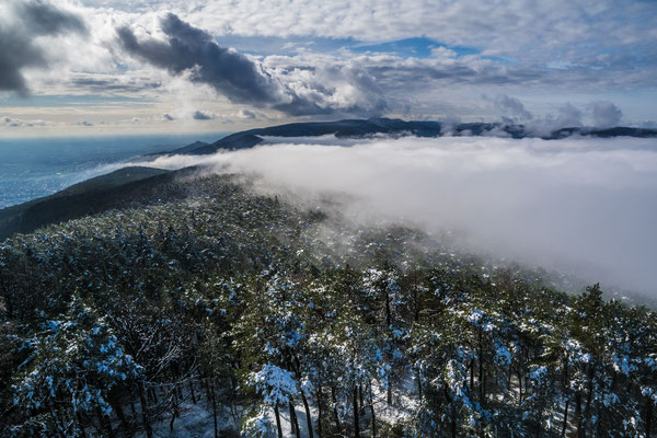 Nebelstimmungen im Pfälzerwald
