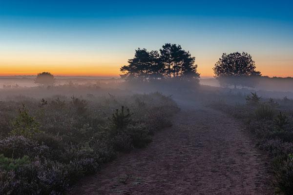 Bodennebel in der Mehlinger Heide