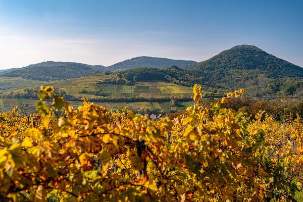 Goldener Herbst bei Albersweiler