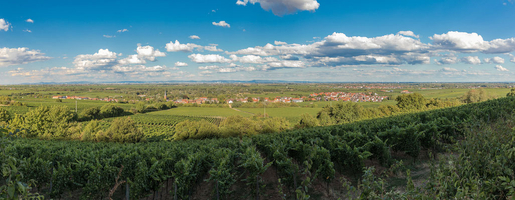 Panoramablick auf Forst und seine Weinlagen