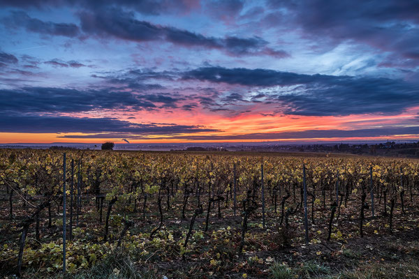 Sonnenaufgang bei Birkweiler