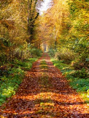 Herbst im Bienwald bei Neuburg