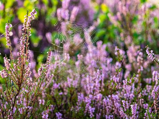 Frühherbst in der Mehlinger Heide