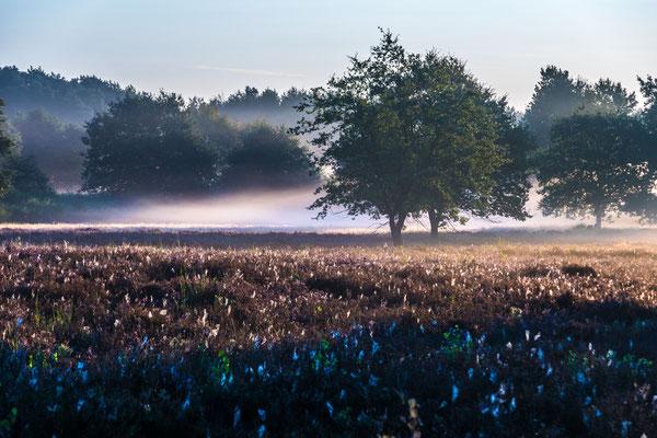 Morgennebel über dem Heidekraut