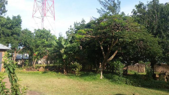 Der Garten des Grundstücks