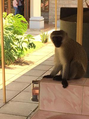 Ein freilaufender Affe auf dem Gelände...:)