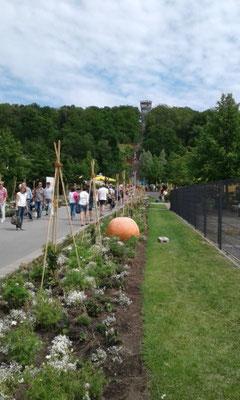 Die Promenade im Sauerlandpark.