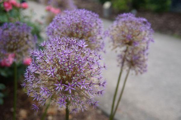 Der Sauerlandpark in Hemer istim Sommer ein Blumenparadies.