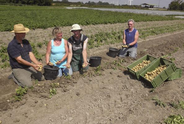 Gemeinsam im Kartoffel Feld