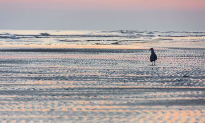 Sonnenaufgang auf Langeoog geht immer