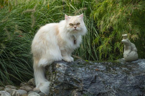 Katze auf Quellstein