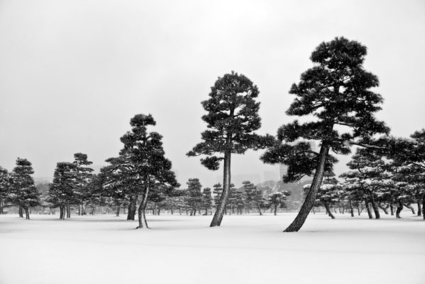 Yuki / photo / 2016 雪