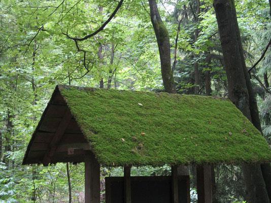 Moosgrünes Dach,©C.Gronenberg