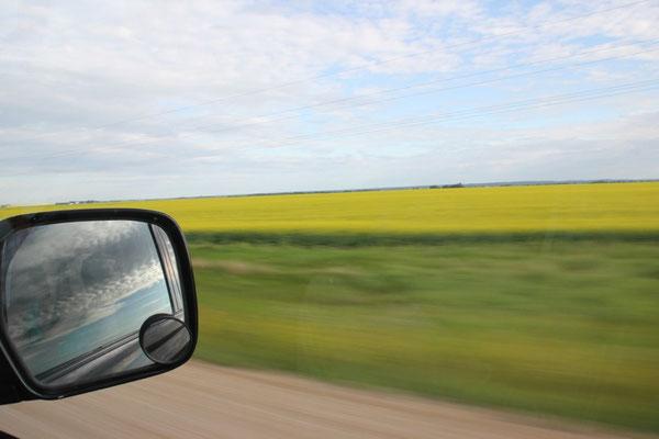 Der schöne Himmel passt prima zu den gelben Feldern.