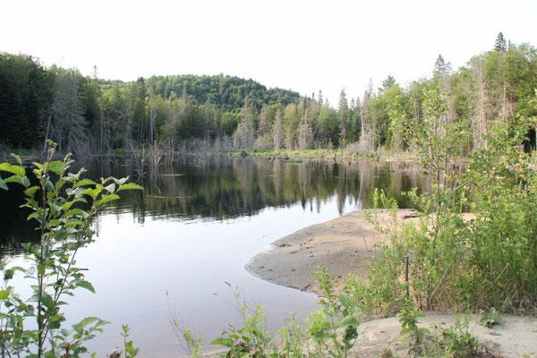Auch im Reserve faunique de Papineau-LabelleÜberall gab es schöne Seen.