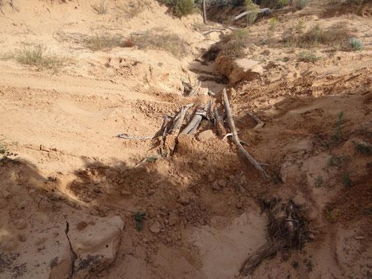 Baumstämme und Steine mussten heran geschleppt werden.
