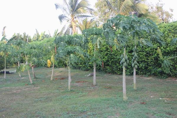 Wunderschöner Garten mit Früchten.