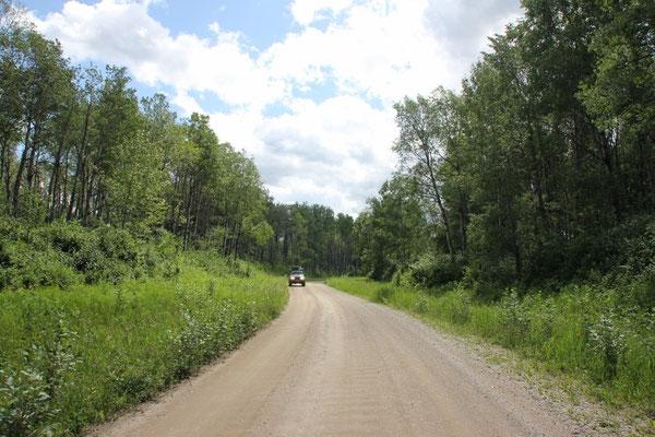 auf dem Weg zu den Bisons