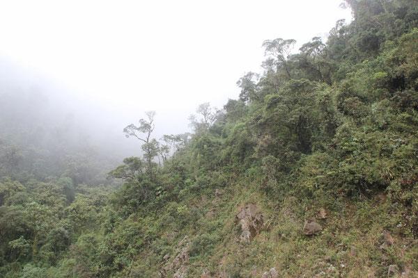 Durch grünen Nebelwald über Berg und Tal.