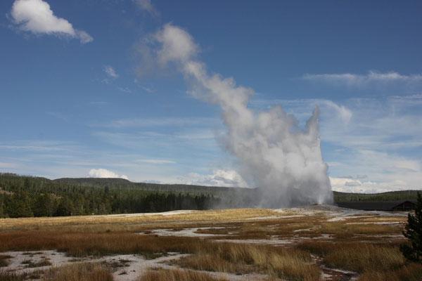 Auf dem Rückweg sahen wir gleich noch eine Eruption des Old Faithful Geyser.
