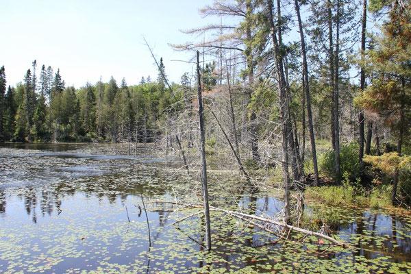 Die kleineren Seen im Hinterland sahen eher so aus.