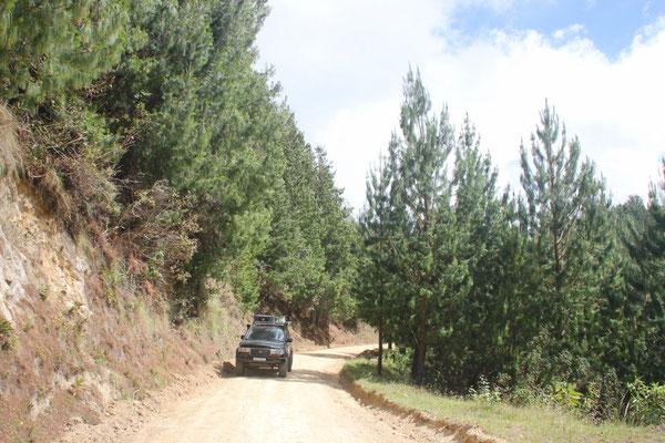 Zuerst fuhren wir durch dunkelgrünen Nadelwald.