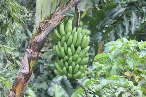 schöne Pflanzenauswahl auf dem Camping in Ibagué
