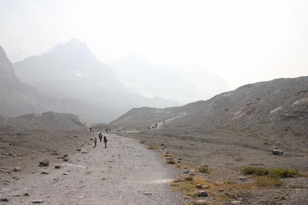 Der Weg zum Athabasca Gletscher.
