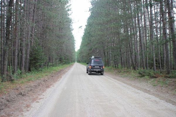 Bäume gibt es hier zu Hauf, so schön in Reih und Glied stehen sie aber selten.