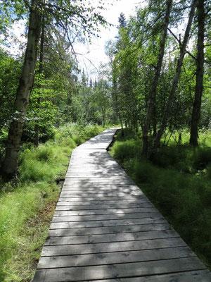 Boardwalk zu den Liard River Hot Springs