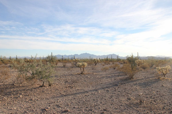 Die Landschaft im Organ Pipe Cactus National Monument