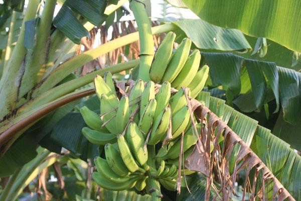 Unter anderem Bananen.