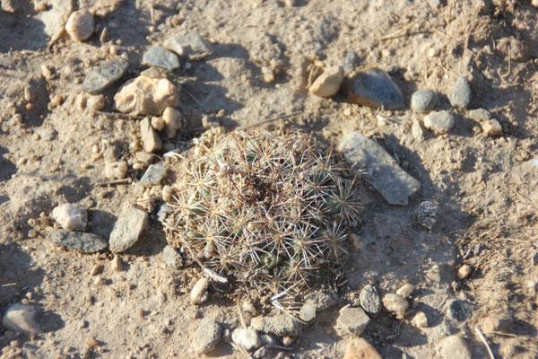 Kaktus bei unserem Schlafplatz